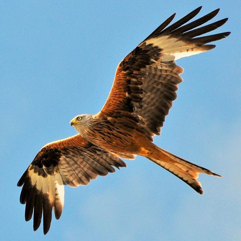 Identifying Birds Of Prey Barrettine Environmental Health