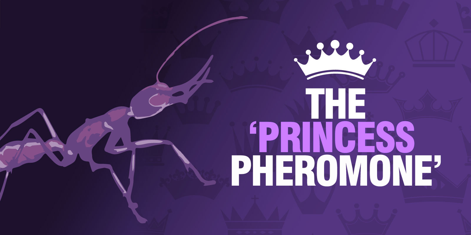 The 'Princess Pheromone'