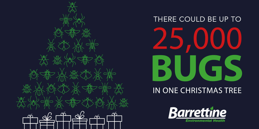 Did you know that one Christmas tree can have up to 25,000 bugs ?
