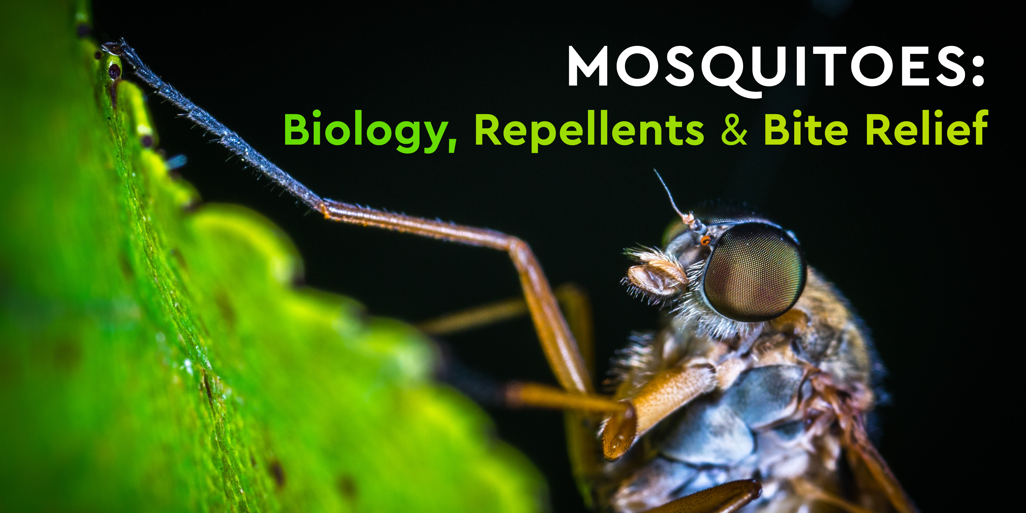 Mosquitoes Biology, Repellents & Bite Relief