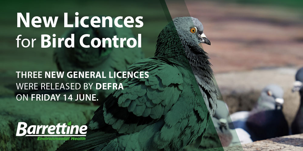 New General Licences for Bird Control Released by DEFRA