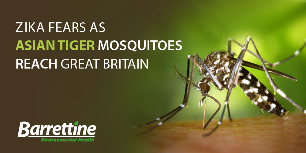 ZIKA FEARS AS ASIAN TIGER MOSQUITOES REACH BRITAIN