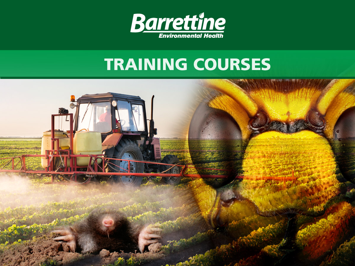 Barrettine Training
