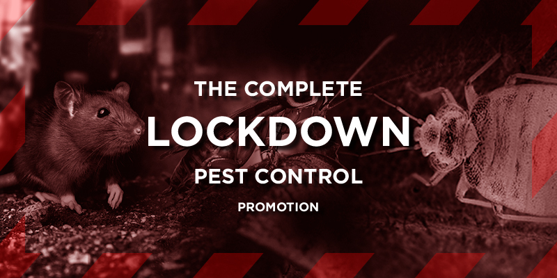The Complete Lockdown Pest Control Promotion