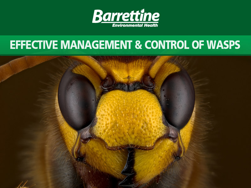 Effective Management & Control of Wasps