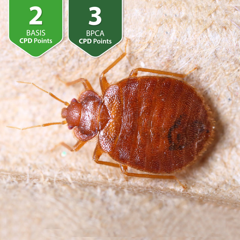 Professional Bed Bug Control