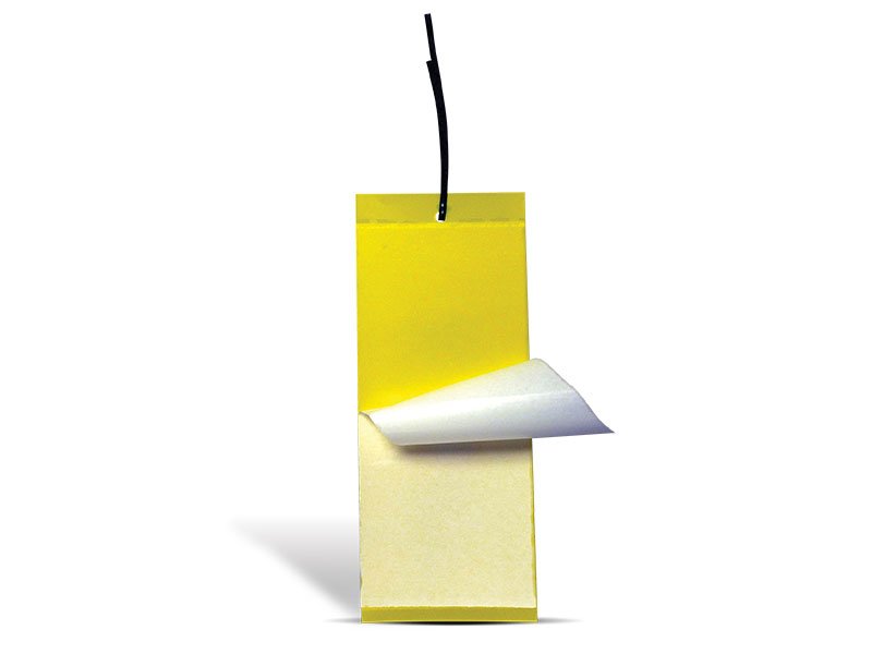 Trappit Medium Yellow Sticky Traps