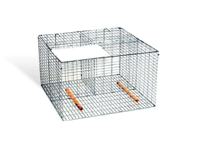 Fold-Flat Larsen Cage Trap